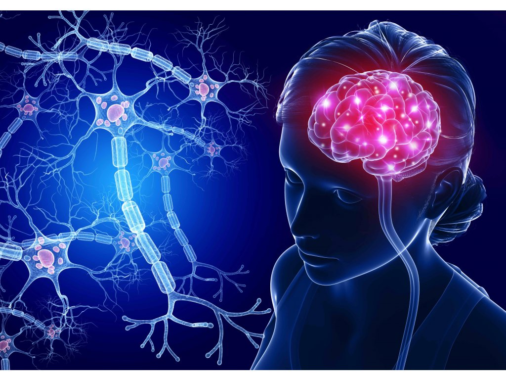 5654 mcd14 brain and nerve cells