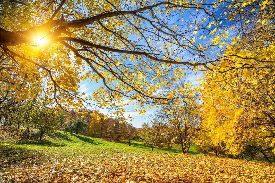 Наутро свежо, а преку денот сончево со мала локална облачност во јужните делови
